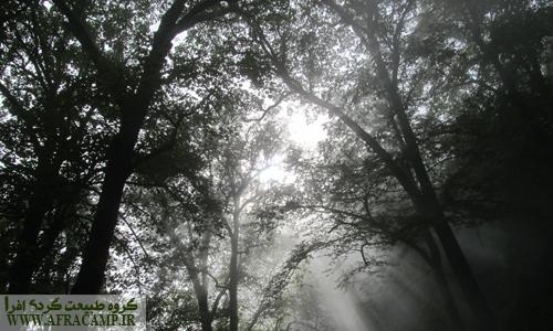 جنگل متراکم و پرتو های نور خورشید