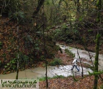 مسیر جنگلی تا رسیدن به آبشار ولیلا