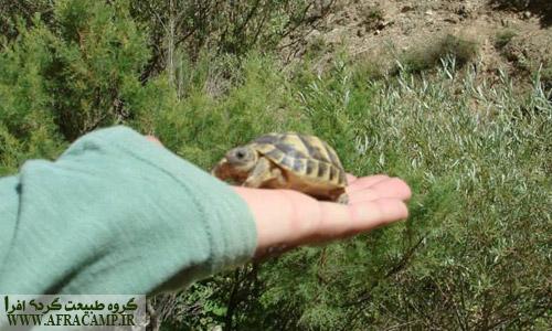 طبیعت این دره زیستگاه مناسبی برای این لاک پشت هاست.