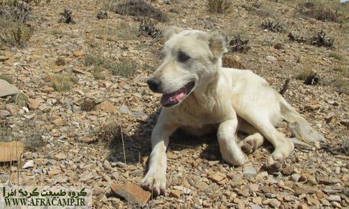 بوشوگ سگی که از فیلبند تا الیمستان با ما همراه شد و مراقبمون بود