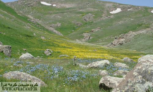 گلهای بهاری مسیر