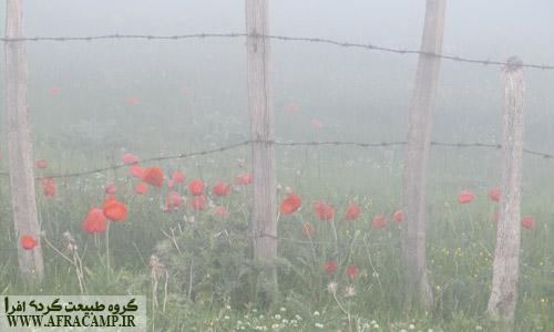 در مدت اقامت ما در سوباتان چندین بار ابرها از میان ما و روستا عبور کردند