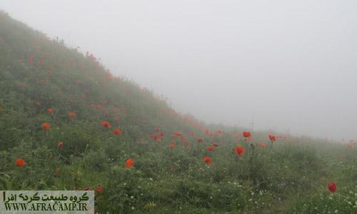 مه و شقایق های سوباتان