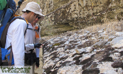 خزه های روی صخره ها که با اندکی رطوبت سبزی زیبای خود را نمایان می کنند