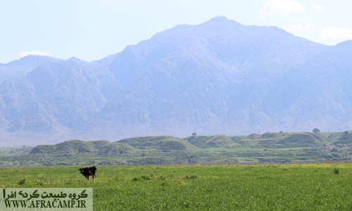 Suitable climate desert lily, has provided an opportunity for agriculture