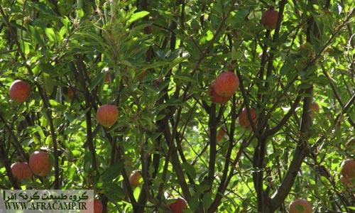 در اواخر شهریور و نزدیک شدن به فصل سیب هرانده بسیار دیدنی است.