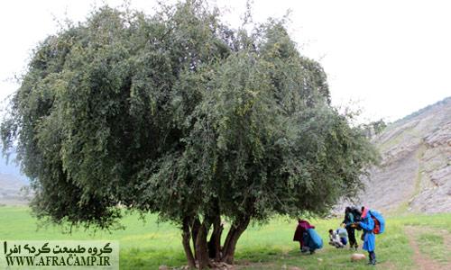 درخت با سخاوت کنار، ما را میهمان خود کرد.