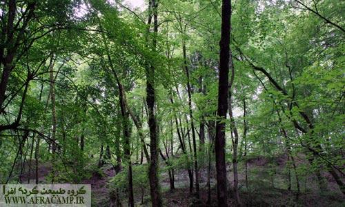 مسیر جنگلی