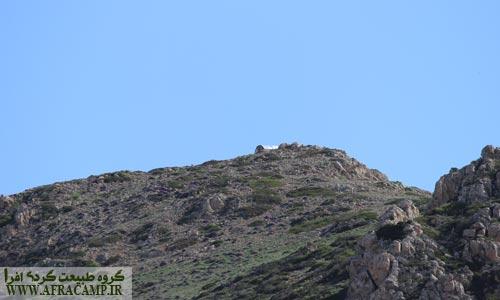 نمای دور جان پناه قله