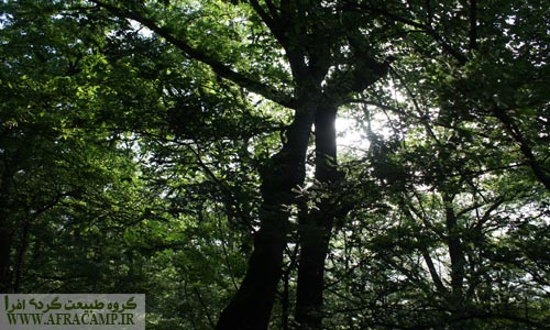 تراکم جنگل و سایه ای دلپذیر