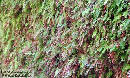 دیواره های سبز تنگ زینگان