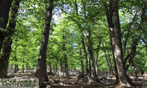 مسیر جنگلی قله