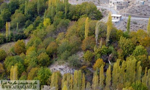 درختان رنگارنگ روستا
