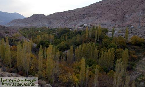 پاییز درختان تبریزی و سپیدار