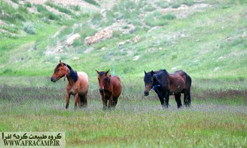 اسب حیوان نجیبی است...