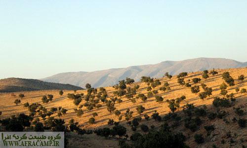 جنگل بلوط در ارتفاعات تنگ بستانک