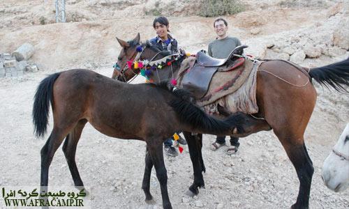 کره اسب 5 ماهه و شیر خوردن آن.