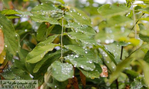 نم نم باران پاییزی