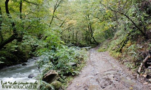 راه جنگلی در کنار رودخانه