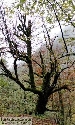 تنه درختان سبز شده بودند