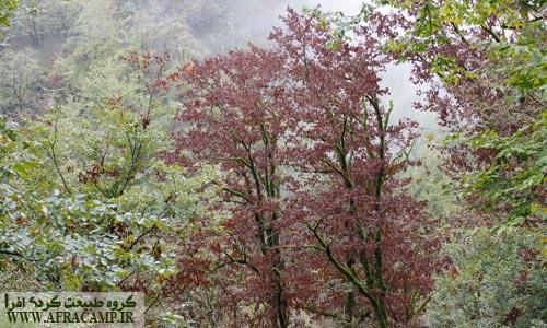 این درختان نگاتیو بودند!! تنه سبز و برگ قهوه ای