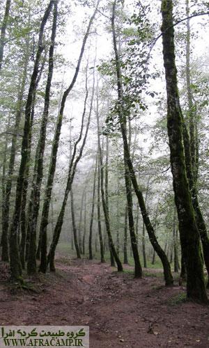 جنگل های لوندویل