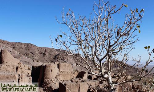 درخت بنه بر بلندای روستای اسفندیار