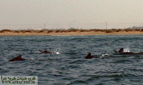 حالا این دلفین ها هستند که همه را محو خود کرده اند .