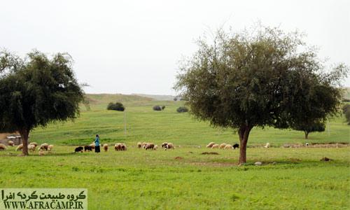 خوزستان بهاری و درختان کنار