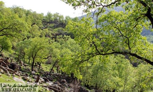 جنگل های بهاری بلوط