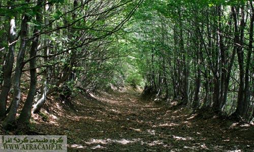 پس از گذر از کنار اسپیناس منظره ای فوق العاده زیبا و دالان مانند جنگلی پیش روست.