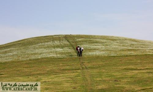 تپه پر از گل