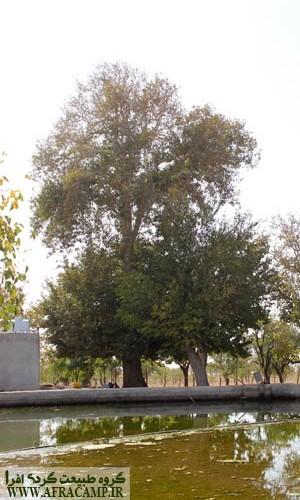 www.afracamp.ir-bagh-sangi-08
