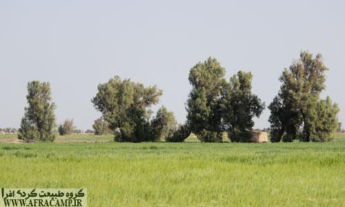 جاده محمد آباد به قلعه نو