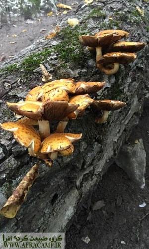 قارچ هایی که از هر فرصتی استفاده می کنند.