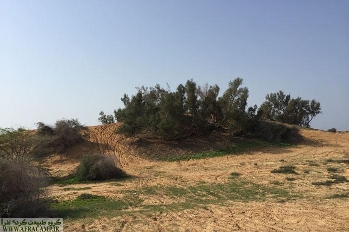 درخت گز رو باید به فهرست بلند بالای تنوع گیاهی این منطقه اضافه کرد