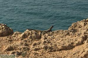 پارک ملی نایبند زیستگاه انواع جانوران است، جبیر، میش، کل، بز انواع پرندگان و ...