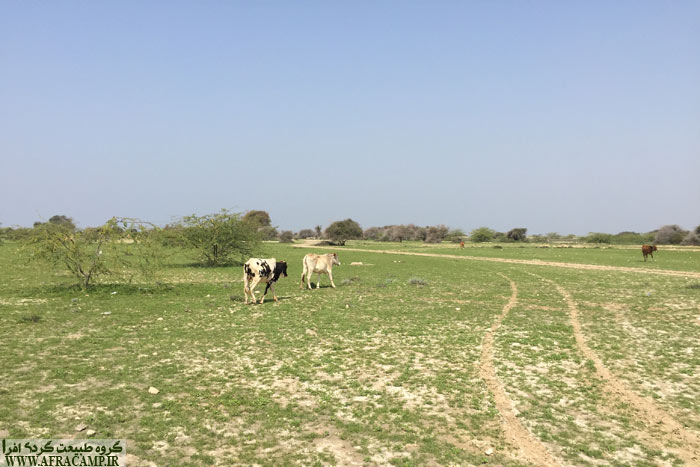 هوا بهاری شده و زمین ها سبز