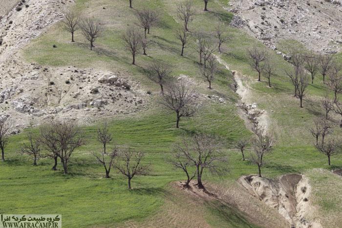جنگل های بلوط دیشموک در نوروز هنوز سبز نشده اند.
