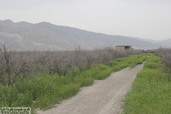 باغات انار