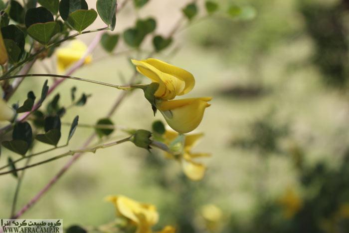 طبیعت و پوشش گیاهی منطقه در زیبا بودن این پیمایش بسیار موثر است.