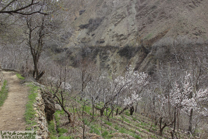 بهار و شکوفه باران در اواخر فروردین