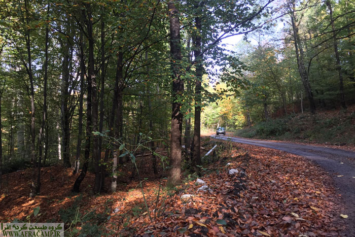 جاده جنگلی که به نسبت مناسب است و ماشین های سواری هم در آن تردد دارند