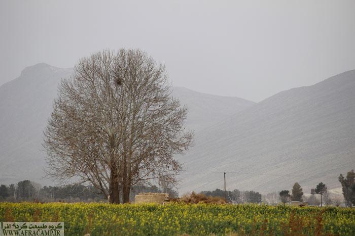 اواخر بهمن تقریبا بهار فیروزآباد خودنمایی می کند. محل عکس در محوطه شهر گور و زمین های کشاورزی در محوطه باستانی