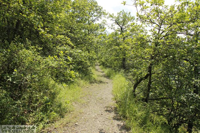A walking path 2 Many kilometers hearty